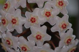 Todo se ilumina cuando floreces! Tout s'illumine quand tu fleuris !