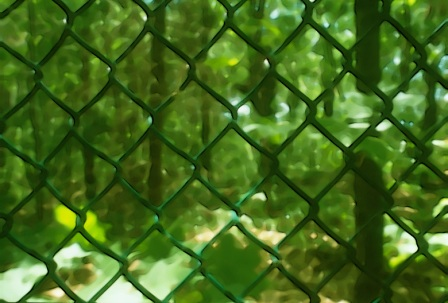 Lo verde puede ser prisión