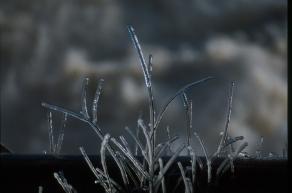 La bruma se hace cristal La bruma se hace cristal El gigante invierno sopla con todas todas sus fuerzas un aire frío, gélido inunda la ribera las ramitas se visten en hábitos diamantinos