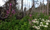 Los senderos pueden tener flores y ramas secas