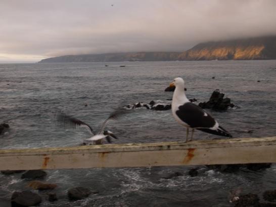 Cuida nuestro mar distante