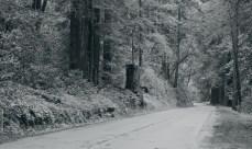 I'm dreaming Yosemite