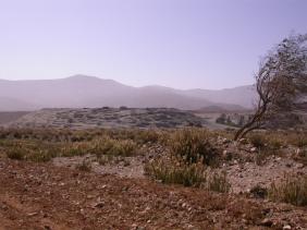 Tierra agreste y aromatica