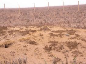 Punta de Choros I