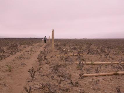 Punta de Choros II