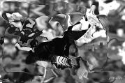 Papillons and Butterflies