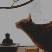 Monsieur Hercules Poirot, my Abyssinian cat hunting snow crystals in the window