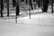 Snow , snow, snow