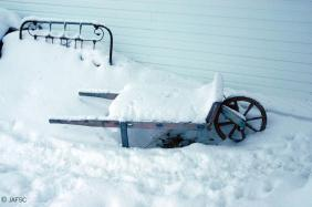 Views of winter in my yard