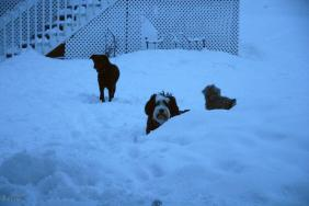 Logically dogs adore snow