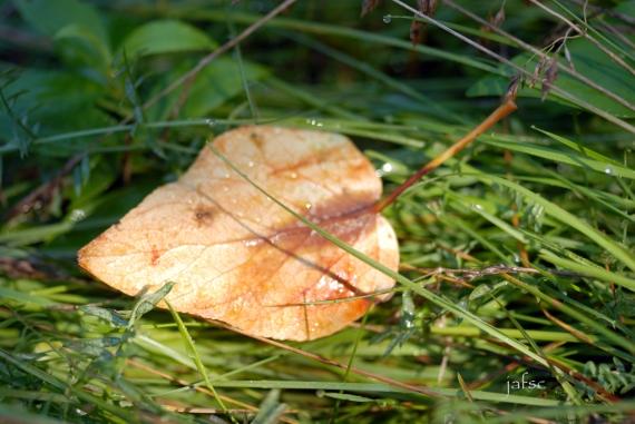 A death leaf in the green garden