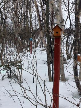 Birds houses waiting for swallows coming on Spring