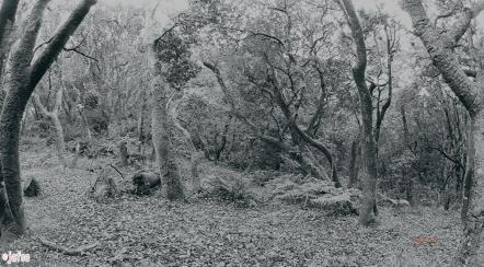 Beautiful forest in California