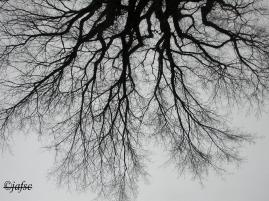 Branches are similar to roots grasping the sky!