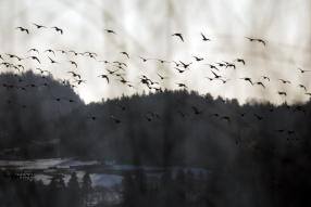 Migratory birds arrived