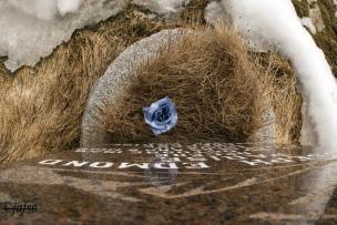 La Tumba adornada con una flor azul