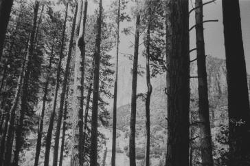 Bosque y montaña