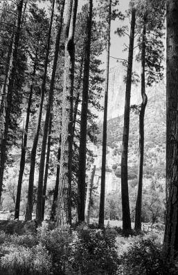Beutiful trees
