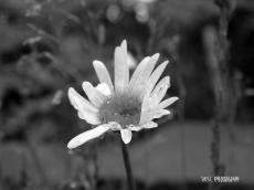 On my garden