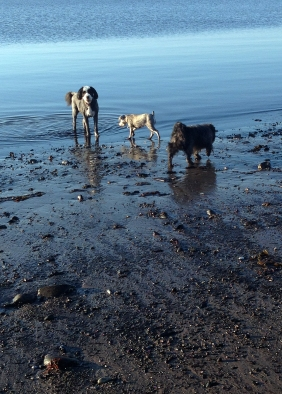 Pandita, Lakshmi and Baloo at the sea bath on special morning. They are part of my 'good mornings' and joyfullness