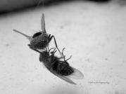 Flies dancing in Death, a version of Butoh Dance