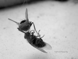 Flies dancing in Death, a version of Butoh Dance