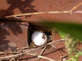 L'escargot dans son refuge