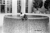 Pigeons dans son bain