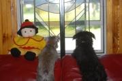 Lakshmi & Baloo