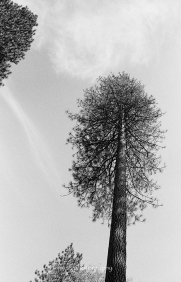In Yosemite Park