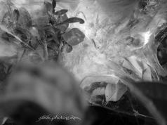 Spider web II : The Margarita