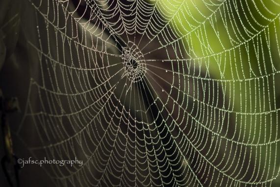 Laberinto de seda, espacio tejido en el Tiempo del bosque Sublime manto de alimentos y fascinaciones!