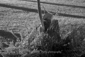 Sculpture from my garden