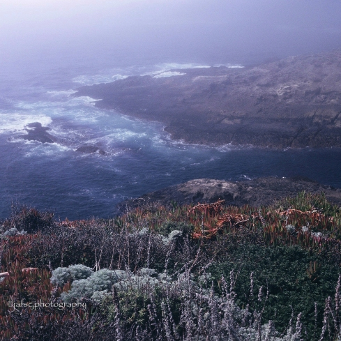Punta de Lobos, California