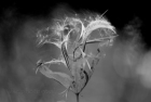 Una Danza y despiertas a las mariposas viajeras y efímeras