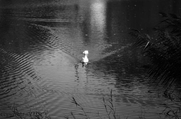 De Soledades parecieras ser el espejo mas las ondas del Lago están siempre debajo de tus alas!