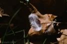 Aunque la hoja ya muerta yace en su lecho,el ave entrega parte de su ternura para acompañarla en tan renovadora aventura