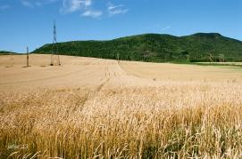 Wheat 's field
