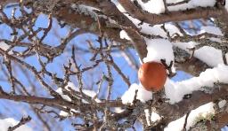 Iced apple