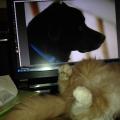 Yoshi Naruto & Boss on the screen