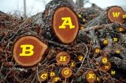 Which letter lacks?