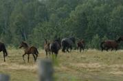 Horses are happy