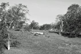 Campo californiano
