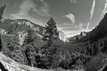 De árboles y rocas