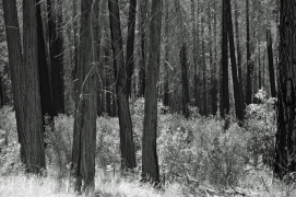 De árboles y árboles