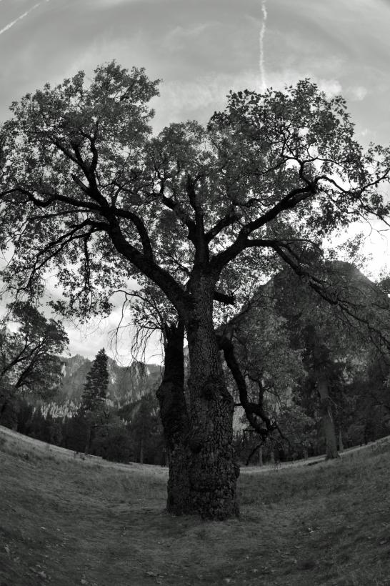 Quien a buen árbol se arri / a buena sombra se cobi