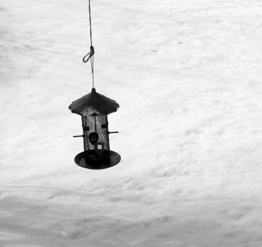 Where are birds