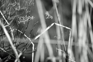 Broken sprigs