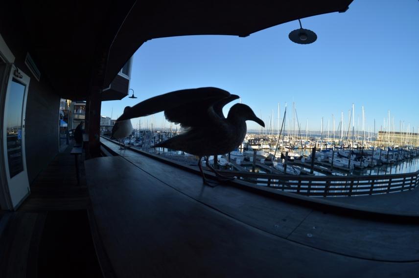 In San Francisco Marina
